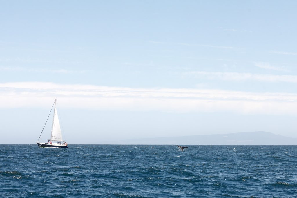 Walvis in Monterey Bay