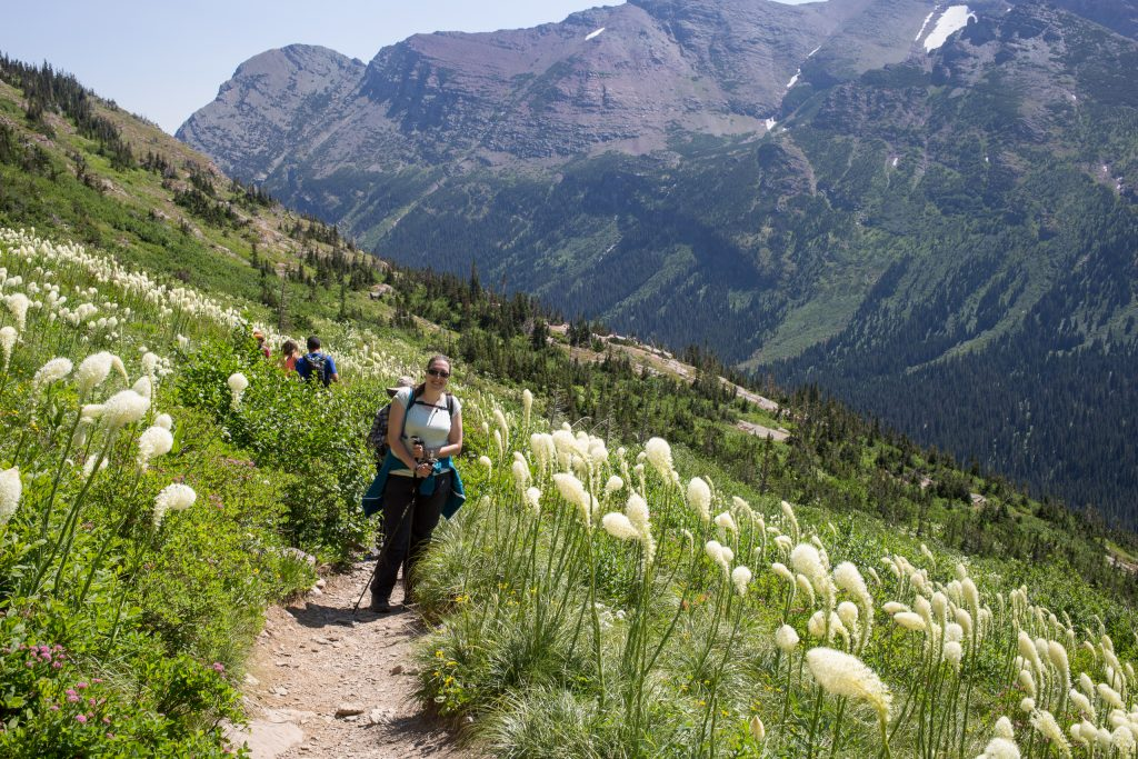 Bear grass op Grinnell Glacier Trail in Glacier National Park