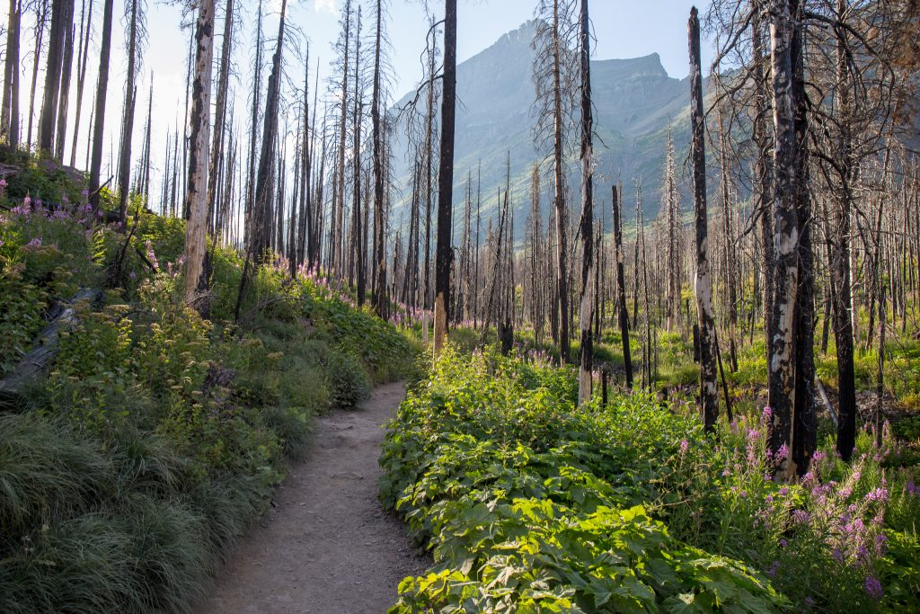 St. Mary Falls Trail in Glacier National Park