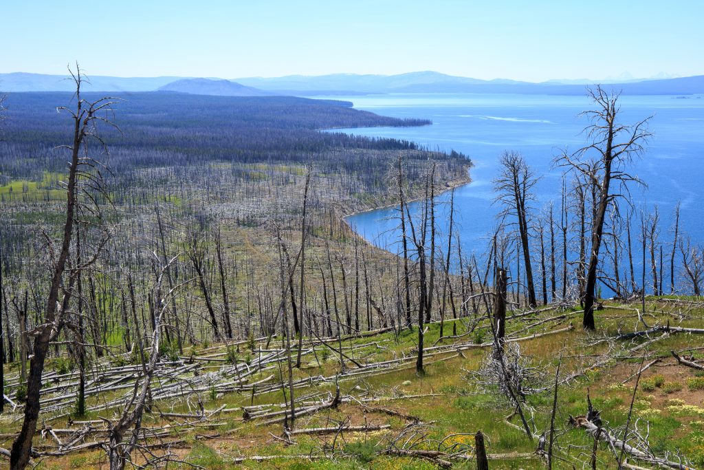 Yellowstone Lake vanaf Lake Butte Overlook